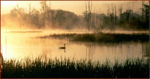 Beaver Marsh