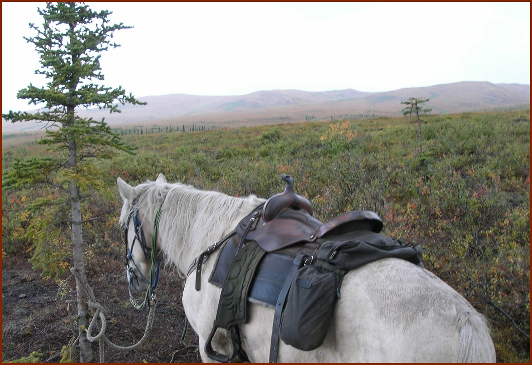 Horse and Tundra © 2009 America In Context