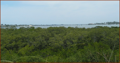 Mangroves and the Bay